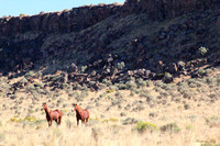 wild horses and western wild lands